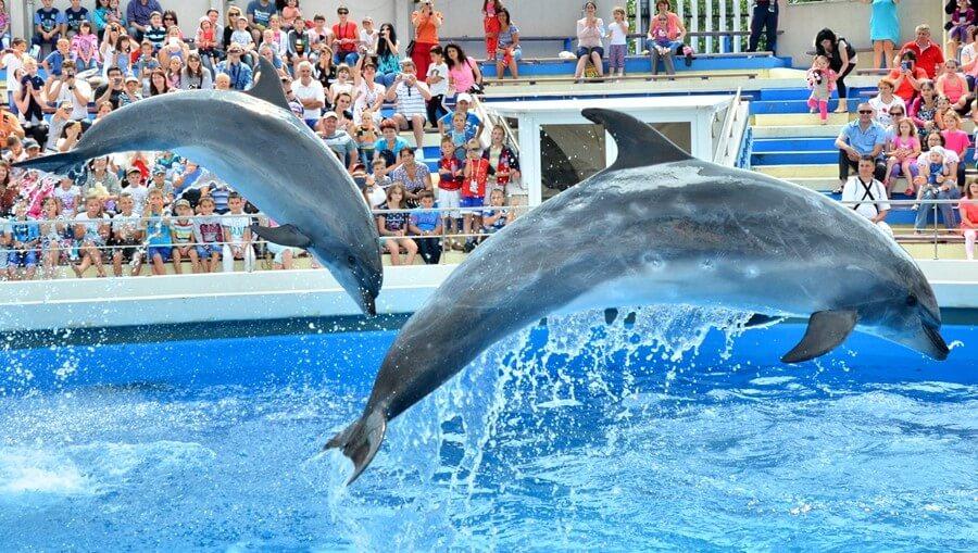 Mamaia dolphinarium