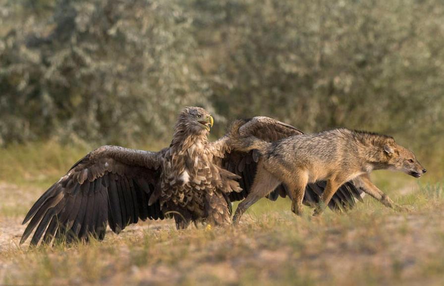 Birdwatching Danube Delta Romania