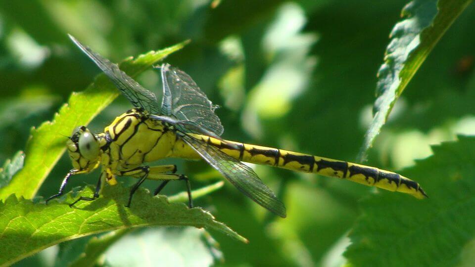 Dragonflies Romania
