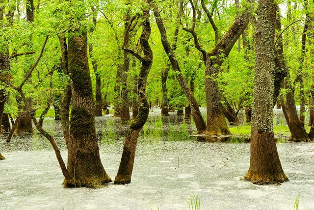 Letea forest danube delta