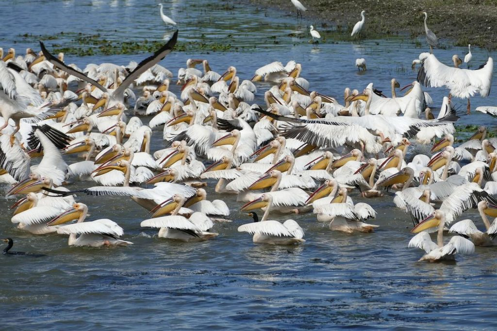Danube delta wildlife watching tours