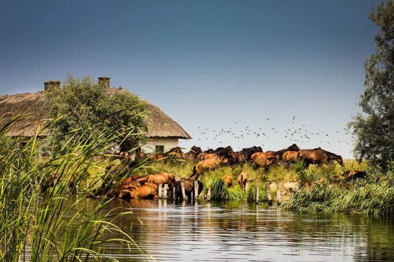 Danube Delta Tours