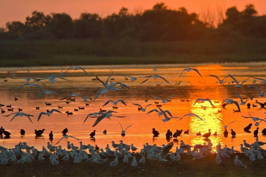 danube delta birdwatching tours
