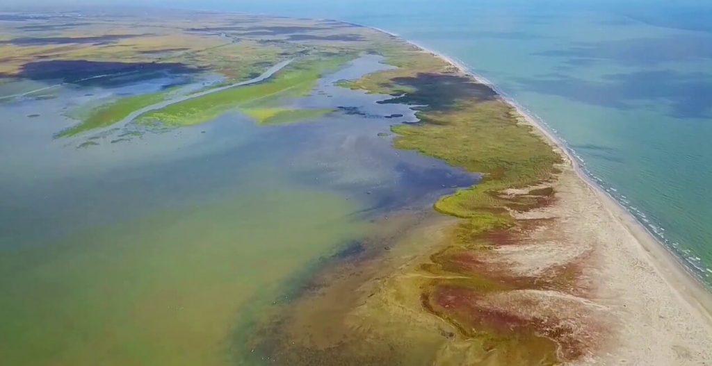 wildlife danube delta