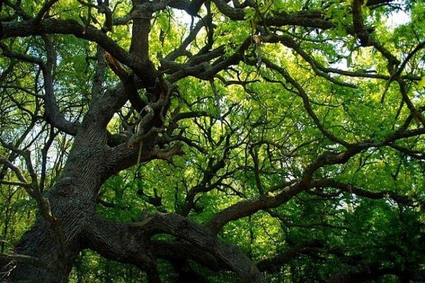 caraoman forest danube delta tours