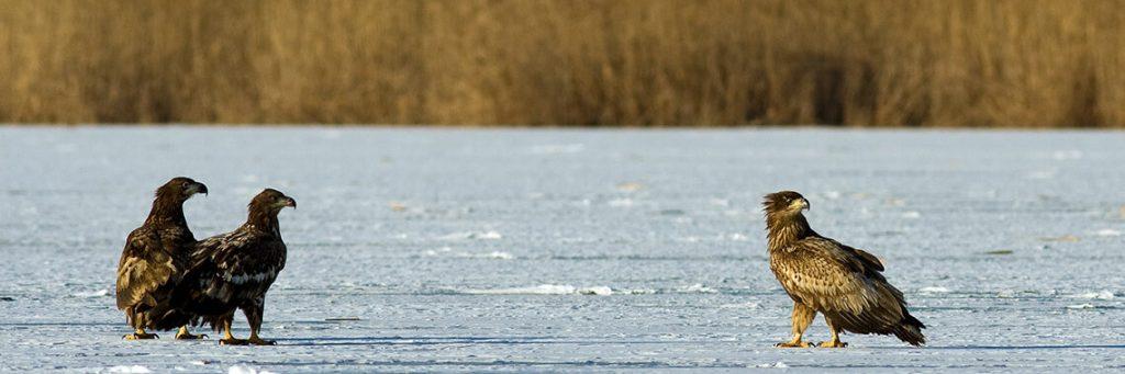 rare birds danube delta