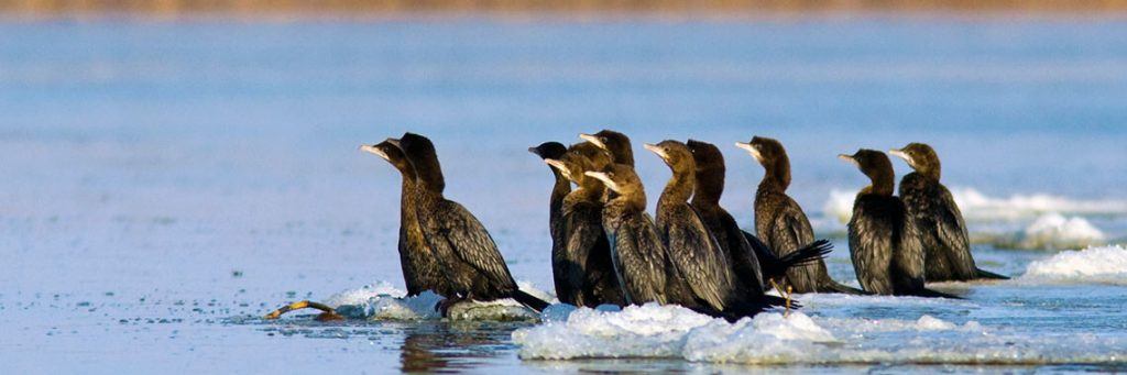 Birdwatching tours danube delta winter