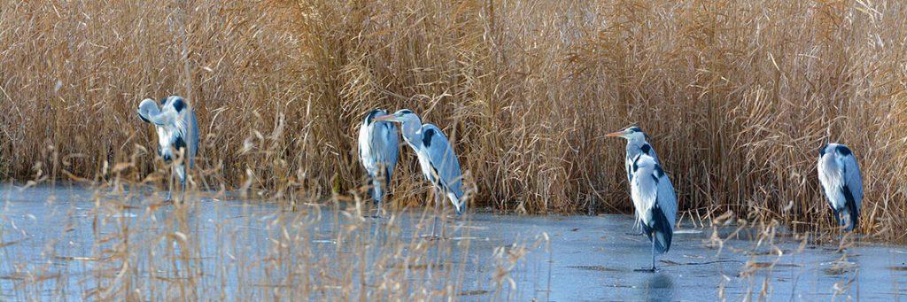 birding danube delta