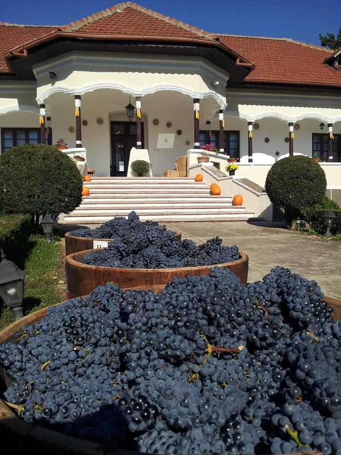 Wine tasting romania