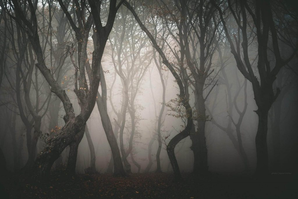 haunted forest Romania