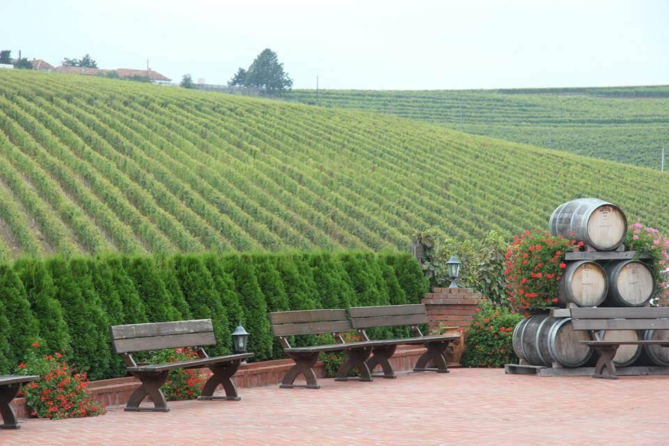 Recas vineyards Timisoara